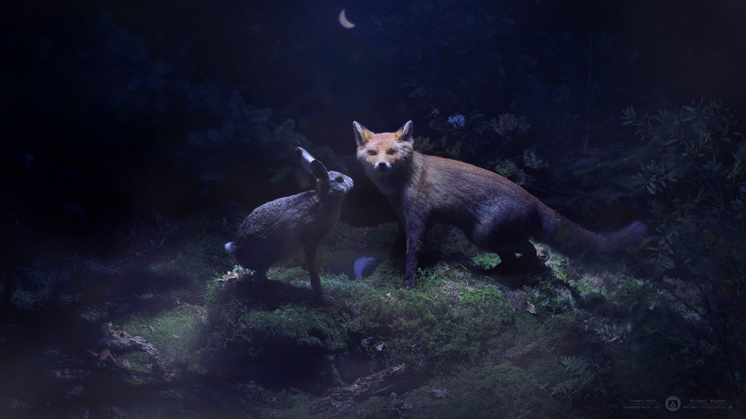 Where Fox Amp Hare Say Goodnight Desktopography